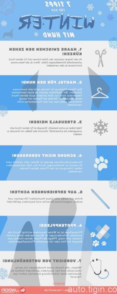 Tolle Tipps für den Winter mit Hund.  –  #tipps #tolle #winter