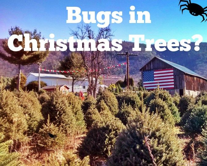 A fresh Christmas tree can add a lovely atmosphere to your home during the holidays, but can they also bring in unwanted pests? http://winteracre.com/real-christmas-trees-bugs/