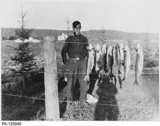 [ Tom Thomson ], Canadian Group of Seven