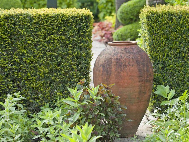 49 besten Sichtschutz im Garten Bilder auf Pinterest Sichtschutz - garten pflanzen sichtschutz