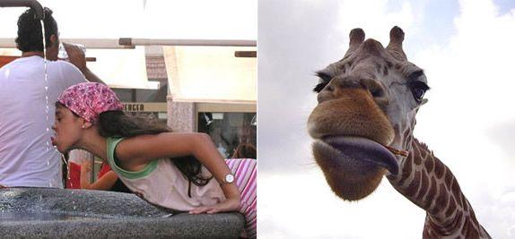 Podobenství zvířat