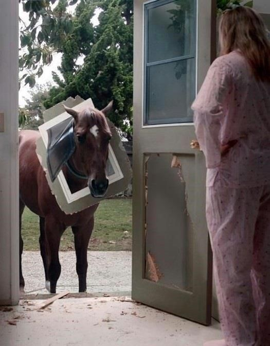 """Oh, DOG door...my bad."" ~ Horse Shaming... but since IT IS a Dog Door... I'll post it to Dog Shaming. :)"
