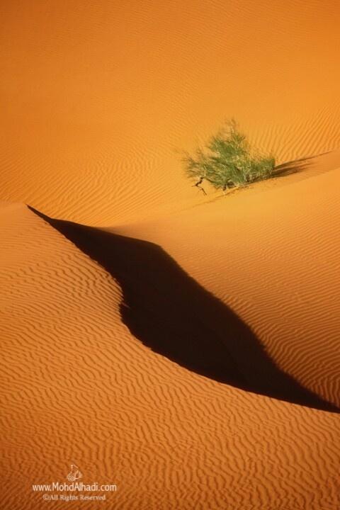 Desert (Oman)