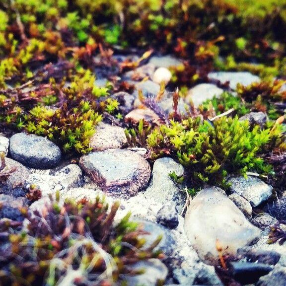 Stones/steine