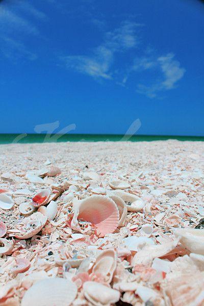 Siesta Key, Florida - great shells. Cool white powdered sugar sand. Gorgeous gulf Fla. beach