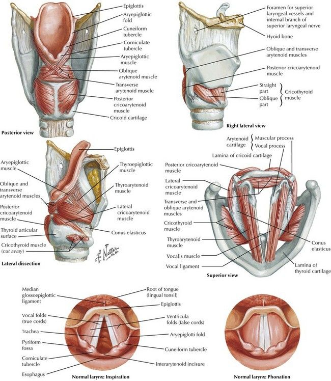 36 best Anatomy images on Pinterest | Anatomy reference, Human ...