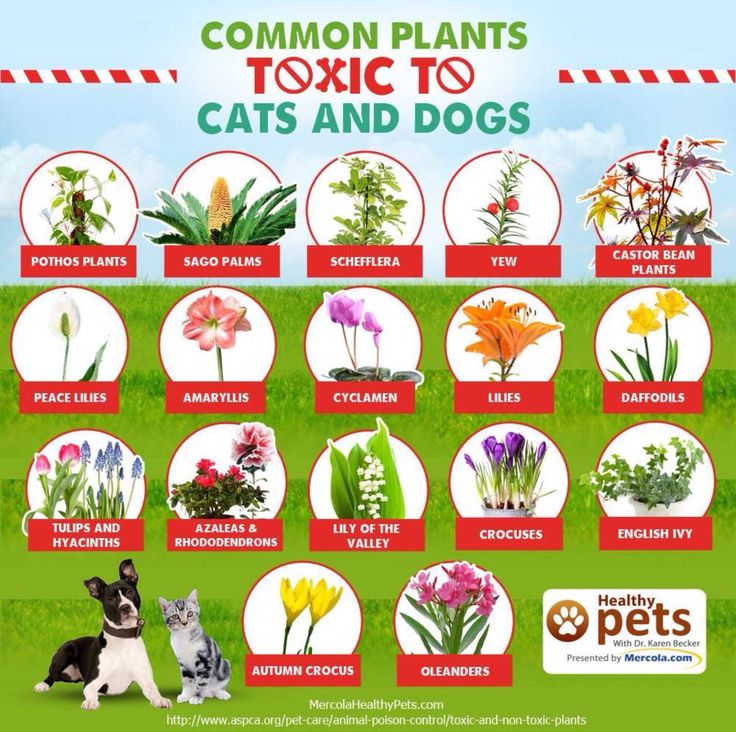 What Plants Are Poisonous To Cats And Dogs
