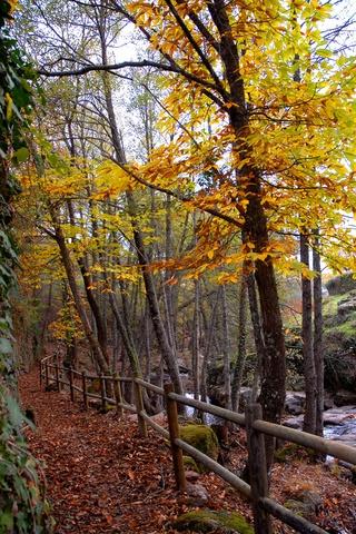 La Vera (Cáceres): paseando sobre un manto de hojas.    Foto: Flickr/ santiago_salamanca — La mejor forma de disfrutar de la naturaleza en otoño es adentrándose en ella. En la Comarca de La Vera, en Cáceres, existen rutas de senderismo con gran atractivo para pasear en esta época del año, como son los alrededores de la Garganta la Olla o Yuste.