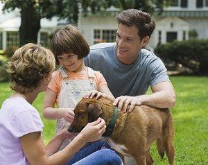 Cesar Millan Dog Training Near Me