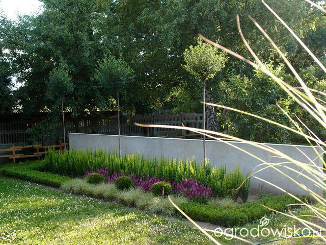 """Moja """"przyziemna"""" :) pasja - strona 791 - Forum ogrodnicze - Ogrodowisko"""