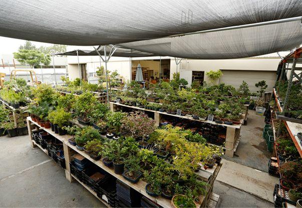 Eastern Leaf Bonsai Nursery