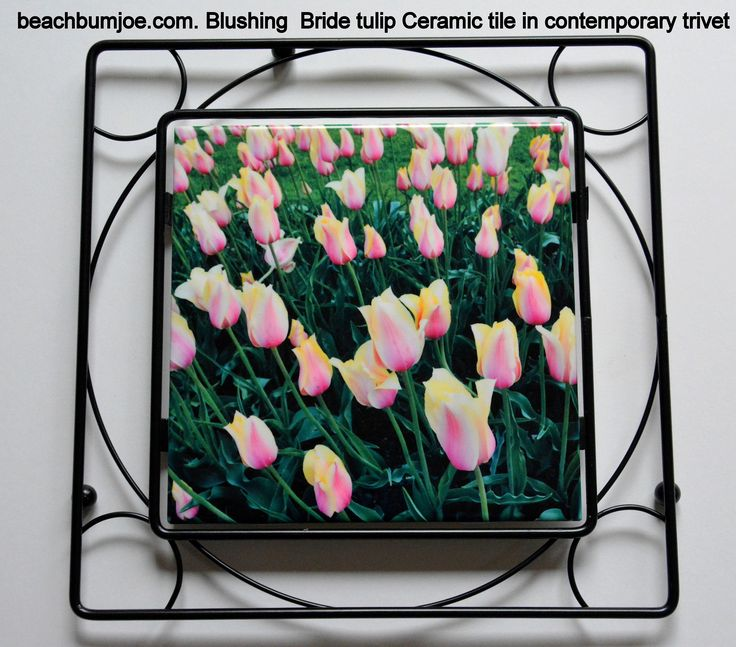 The Blushing Bride tulip in a contemporary trivet. Dye sublimation transfer process.