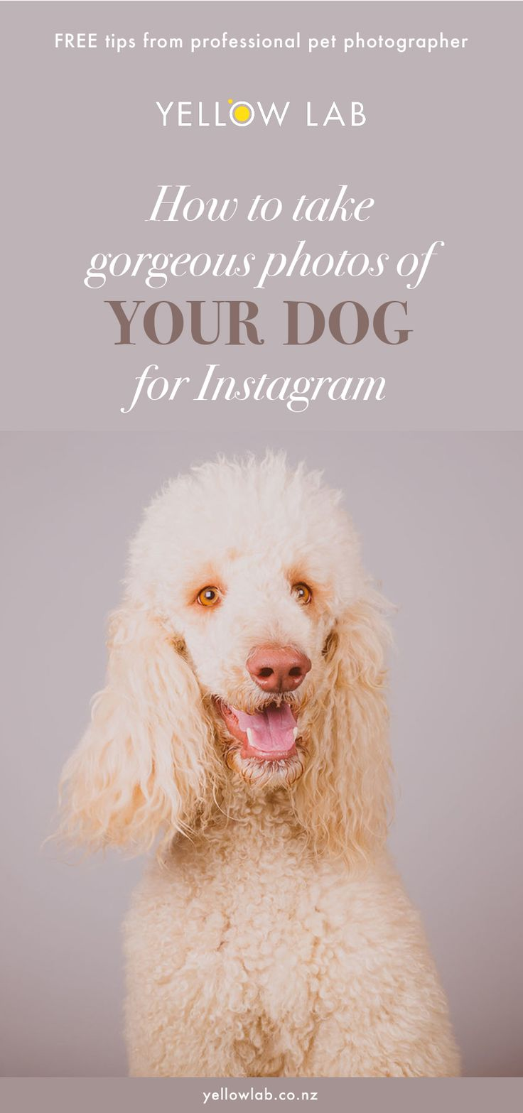 How to take gorgeous photos of your pooch for Instagram; pet photographer in Auckland shares tips on how to photograph your own dog with your iPhone