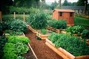 Raised Bed vegetable gardening