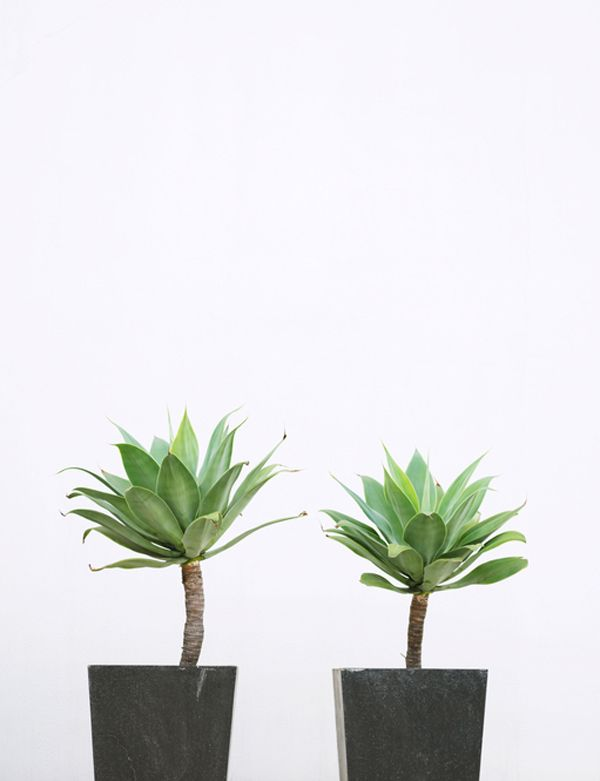 Article - 10 great types of cactus to gift
