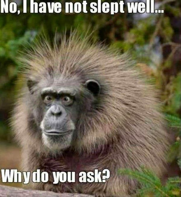 funny animals. . .OMG! this is so hilarious!! that would be me after two days of no sleep!