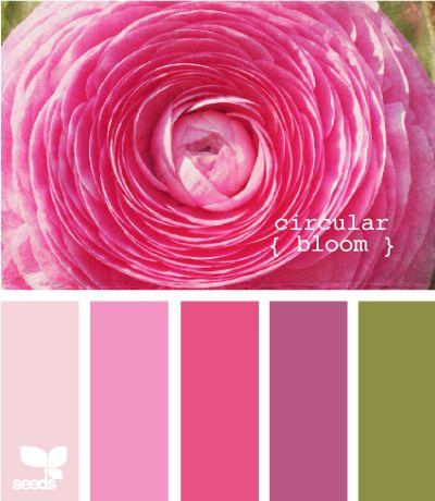 Palette:  Circular Bloom  (Design Seeds)