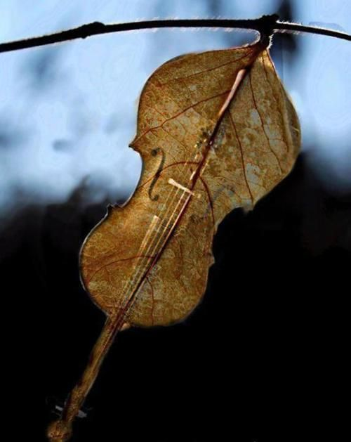 Mother Natures Violin. There is Music in Nature. The Rain, the Wind...