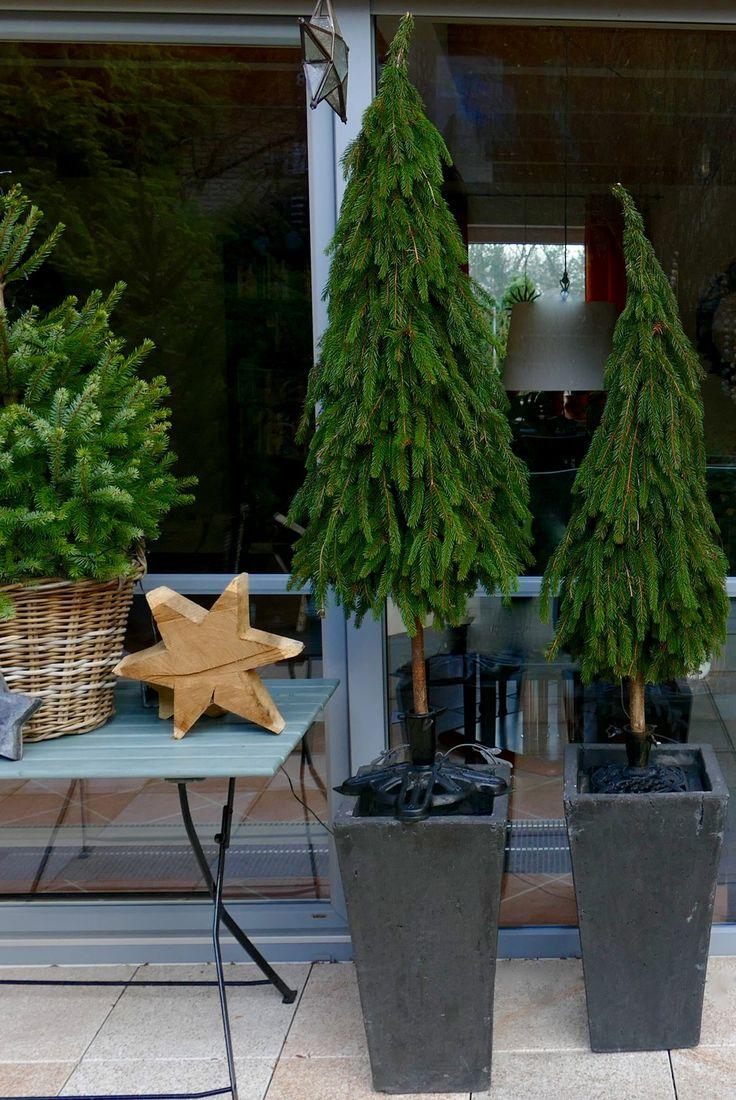 Eine geschenkte Ladung Tannenzweige verarbeitete ich in der letzten Zeit zu kleinen Tannenbäumchen, die wie ein kleiner Wald auf der Terrasse stehen. Dazu band ich auf gleichmässige Länge zurechtgeschnittene Tannenzweigspitzen (ca. 20 – 25 cm lang) mit grün beschichtetem Blumenbindedraht an einen Haselnussstock (1 m und länger). Dabei entscheidet man …