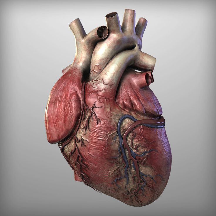 real human heart beating - photo #1