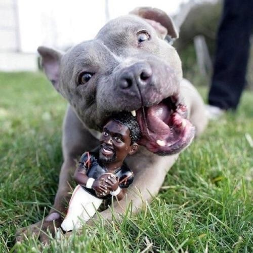 Revenge. Pitbull chewing on Michael Vick... he had it coming.Dogs, The Real, Poetic Justice, Pitbull, Pit Bull, Michael Vicks, Vicks Chew, Chew Toys, Animal