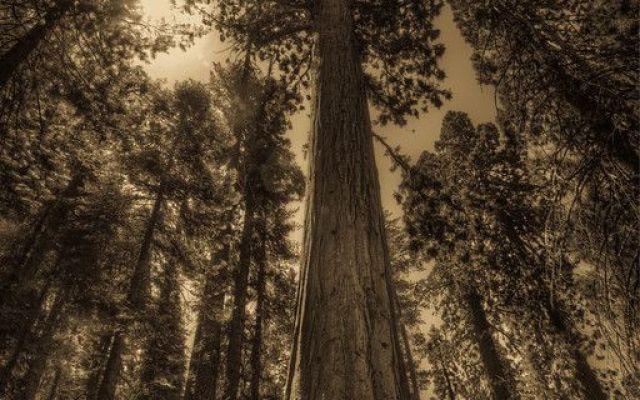 Visita ai più bei parchi degli Stati Uniti con immagini mozzafiato Volo sulle aree protette negli Stati Uniti, molte delle quali nella zona sud ovest: lo Yosemite con le sequoie, l'imponente Grand Canyon, gli alberi del Joshua Tree National Park e le formazioni rocc #viaggio #usa #parchi #nazionali #natura