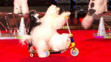 Watch America's Got Talent: The Olate Dogs Live online | Hulu Plus