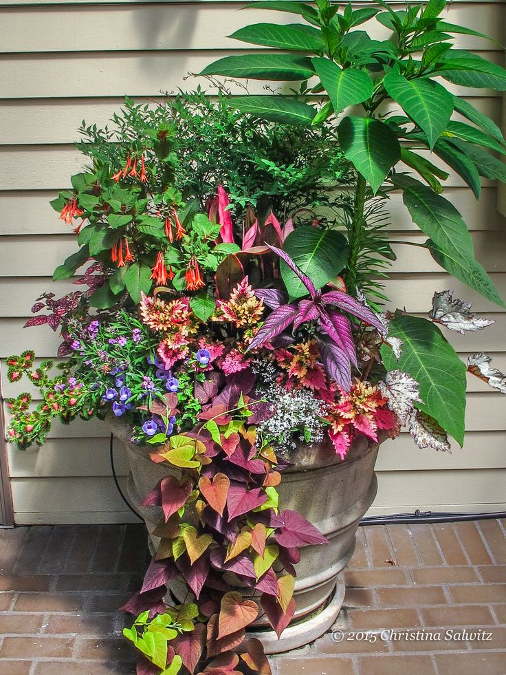 17 best images about container gardening ideas on for Garden planter ideas