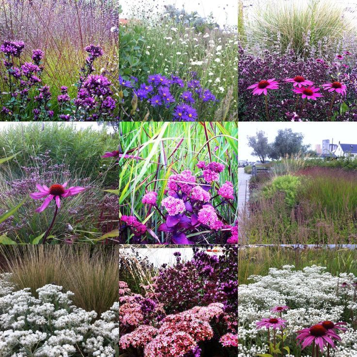 51 best piet oudolf images on pinterest landscaping for Planting design piet oudolf
