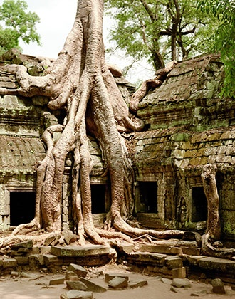 Must go there - Angkor, Cambodia: Trees Trunks, Favorite Place, Amazing Trees, Secret Gardens Fantastic, Ankor Wat Trees, Trees Roots, Trees House, Magic Place, Unusual Gardens