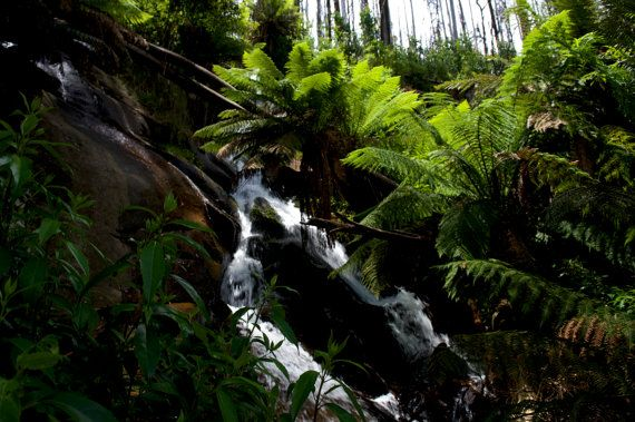 Greenery At Phantom Falls by GPNaturePhotos on Etsy