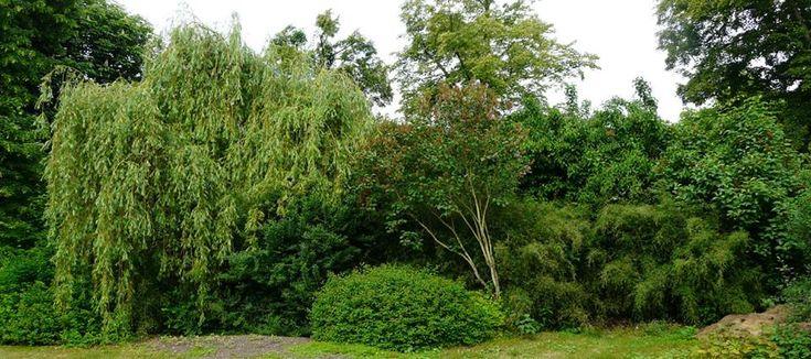 zelená neprůhledná clona z bambusů a keřů