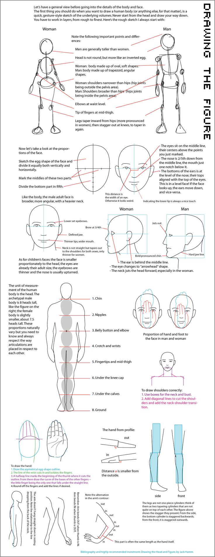 """Human proportions"" drawing chart.....per Sylvie Parent via Jessica Showalter onto the 'Art n Paintings(No Nude Photos) [shared]' board."