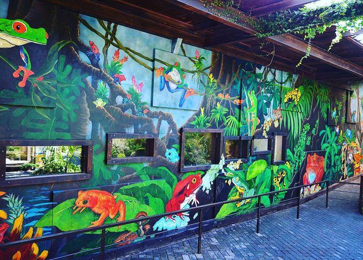 """""""Muro del Camaleón"""", arte al servicio de la conservación en #BIOPARC #Valencia 📷 Esta obra artística alberga 6 terrarios con la colección de urodelos y #anfibios del parque y en ella vemos desde los gallipatos y el sapo partero balear de nuestra fauna, a varias especies de las ranas de #Madagascar   El """"Muro del camaleón"""", en la cueva de KITUM, pretende impresionar con el exótico colorido de la #naturaleza para despertar el necesario cambio hacia la preservación del planeta y su…"""