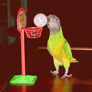 Rules For Parrot Training