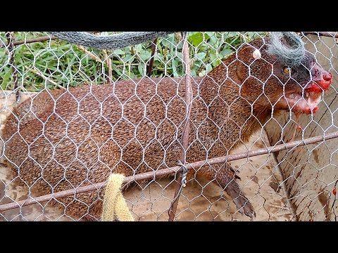 Amazing Quick  Rabbit Trap Using  Plastic Buckets - How To Make Rabbit Trap Work 100% - YouTube