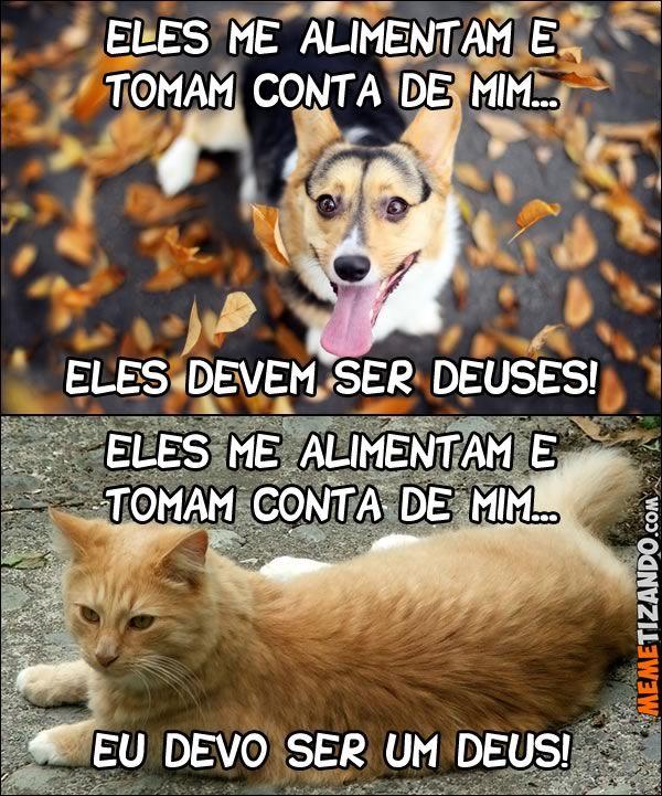 A diferença entre cachorros e gatos