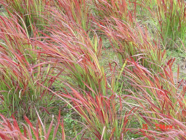 planten voor droog zonnig klimaat - Google zoeken