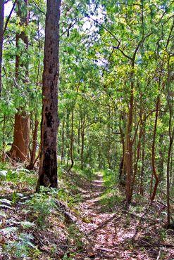 Ravensbourne National Park