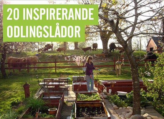 Inspirerande odlingslådor! #styleroom #trädgård #odlingslådor #odlingslåda