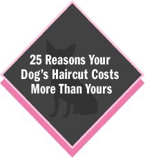 Reasons Why Your Dog's Haircut Costs More Than Yours | Dog Grooming San Diego | Pet Boutique, Dog Bakery |Bow Wow Beauty Shoppe