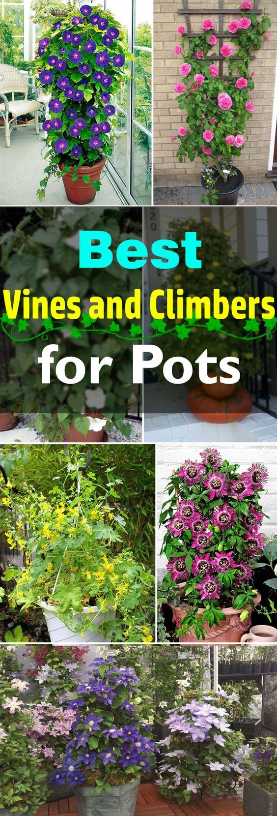 24 Best Vines for Containers