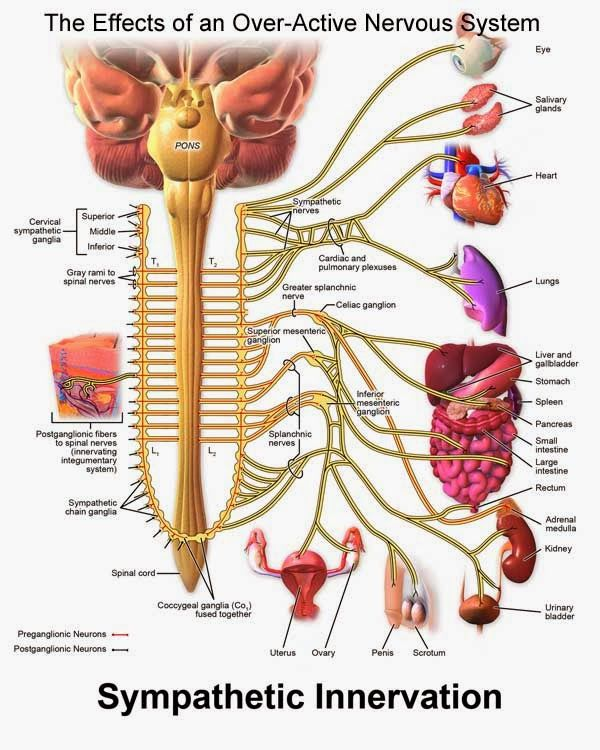 Fibromyalgia nerve pain affects throughout the body. IBS, urinary incontinence, acid reflux