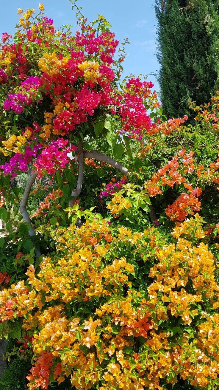 Culorile verii