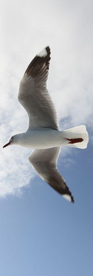 """Tienes la libertad de ser uno mismo, tu verdadero ser, aquí y ahora, y nada puede interponerse en su camino. """"Juan Salvador Gaviota  (Richard Bach)   (via 500px / Seagull by Kevin Rocha)"""