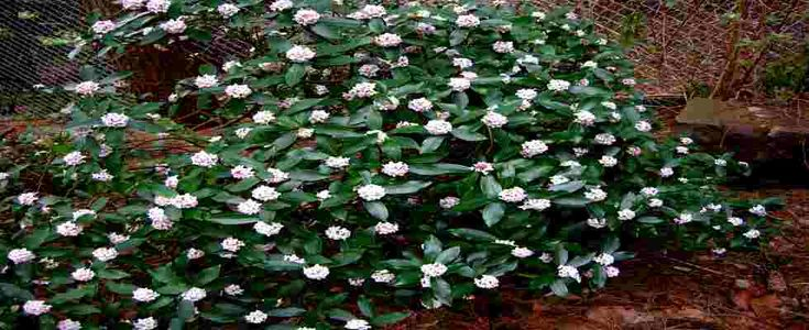 25 best ideas about arbustos en pinterest arbustos y for Arbustos perennes para jardin