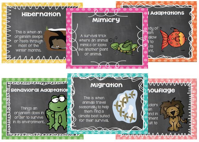 Animal Adaptations cards include mimicry, hibernation, physical adaptations, behavioral adaptations, camouflage, migration