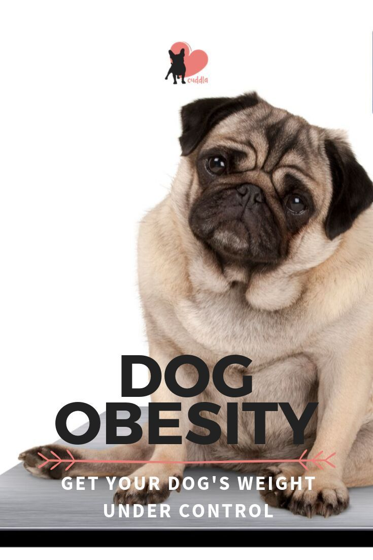 106a1d7b374240e6329f830ad303d37a - How To Get My Overweight Dog To Lose Weight