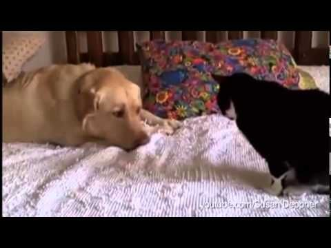 Cats Don't Want to be Bothered by the Friendship of Dogs (Worth the watch!!)