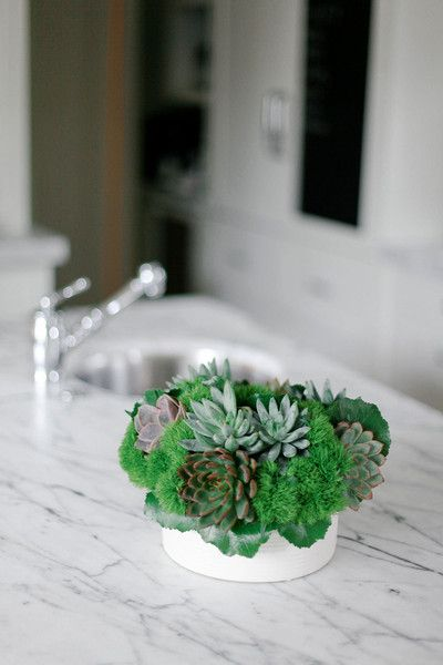 Traditional Garden: A vessel of succulents and air plants on a marble kitchen counter.